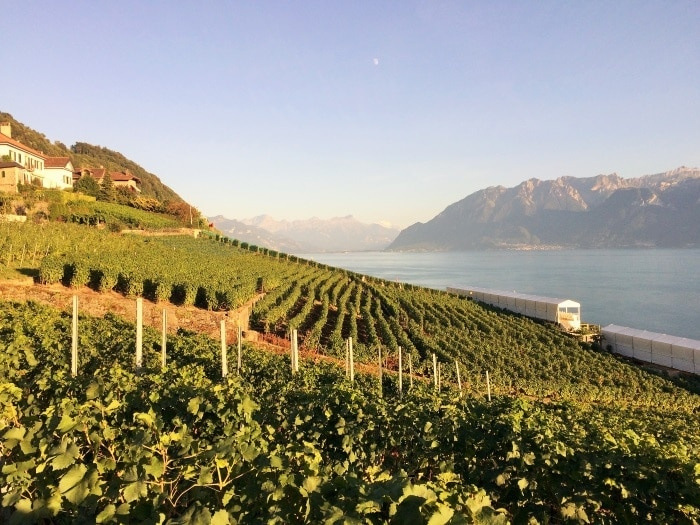 A vineyard on the side of a hill next to Lake Geneva