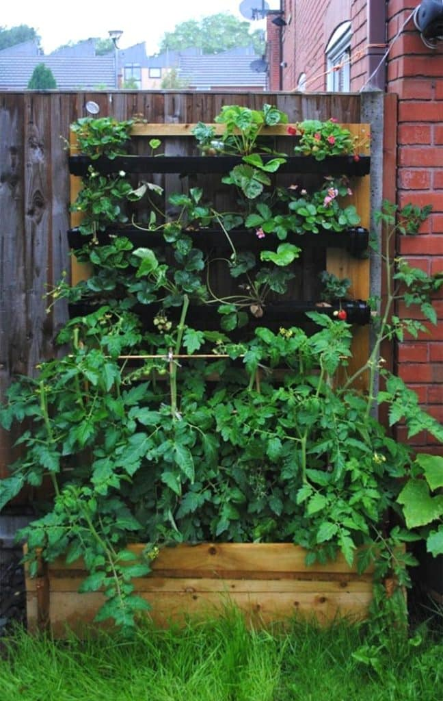 Tomato plants and strawberries growing in a homemade planter