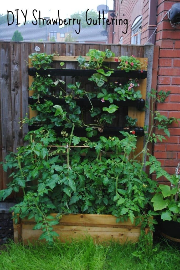 DIY Strawberry Guttering 6