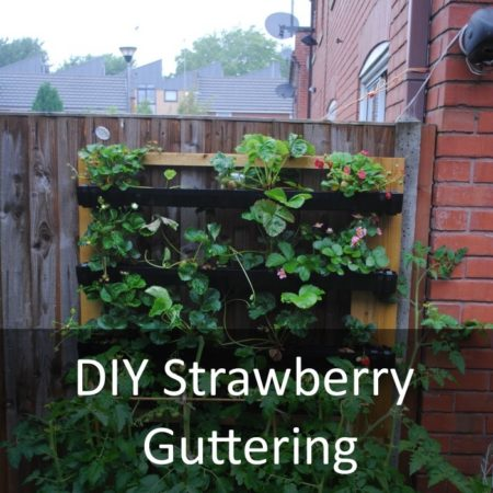 DIY Strawberry Guttering Featured
