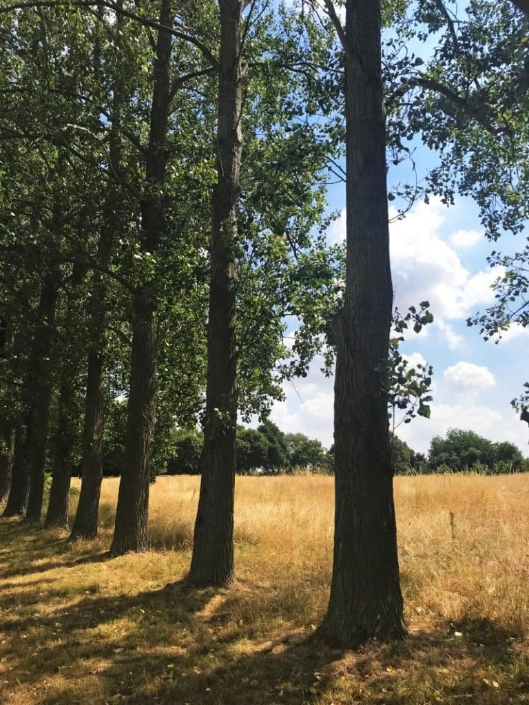 A row of trees in a field