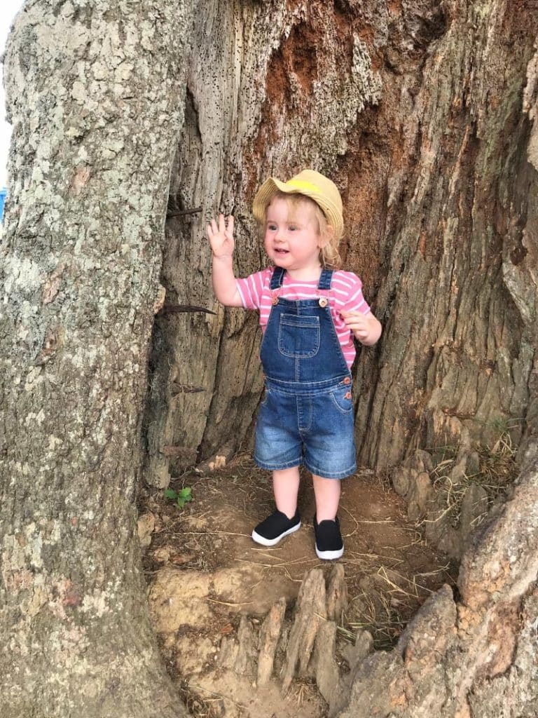 A child stood in the hollow of a tree