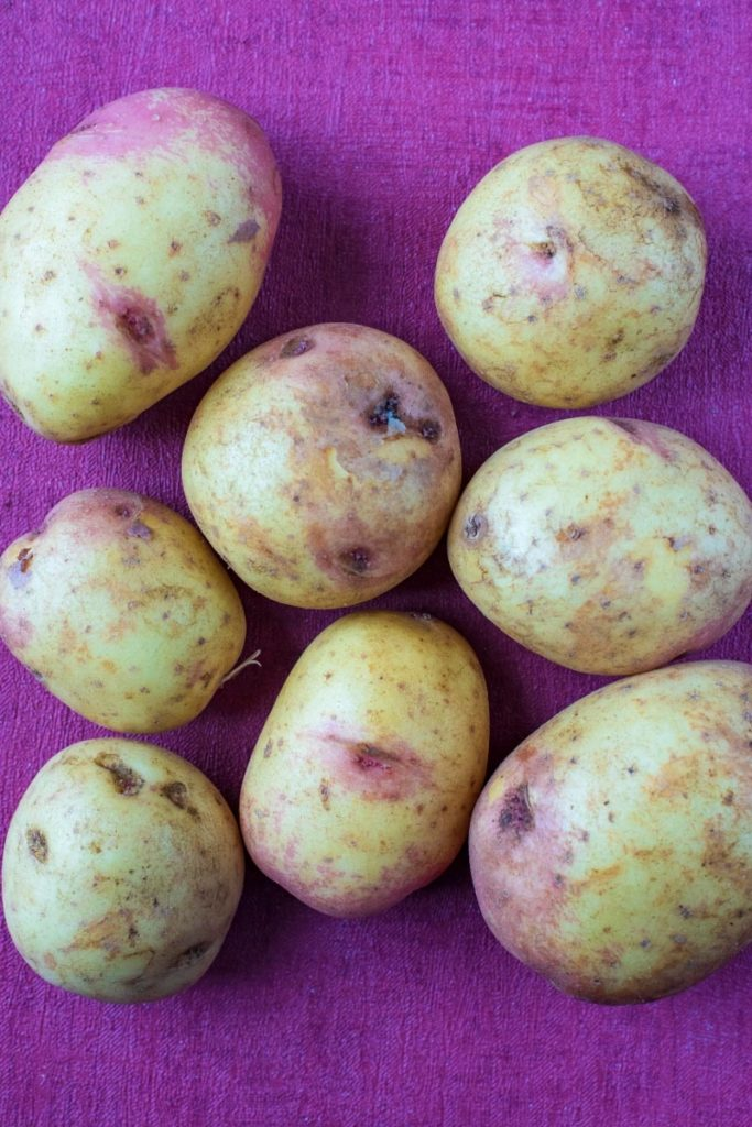 Eight potatoes sat on a purple surface