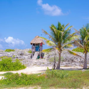 A hut on a beach with palm trees